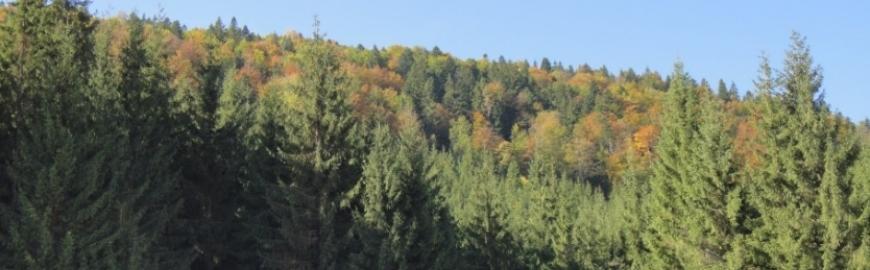 Panorama din Doda Pilii